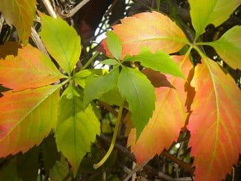 Příchod podzimu