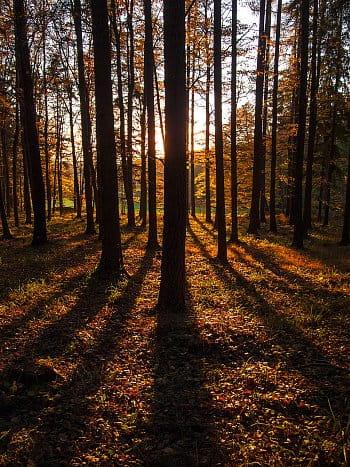 Podzimní stíny