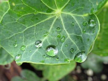 Kapičky deště