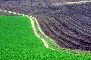 zelená cesta