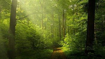 Letní les