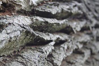 dubové vrásky