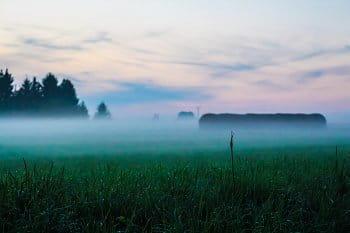 Mlha na louce