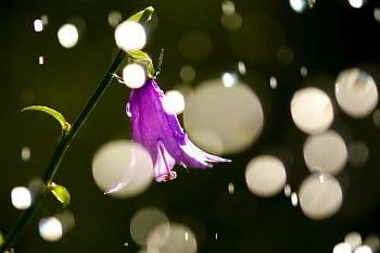 Zvonek v dešti