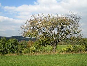 Nastávající podzim na Vysočině
