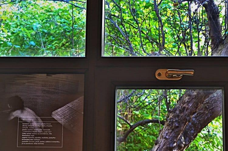 Příroda za oknem