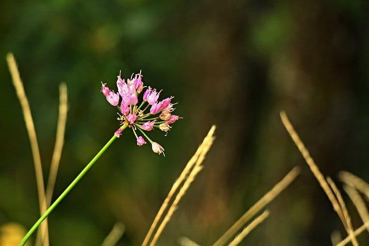 Opuštěná v trávě