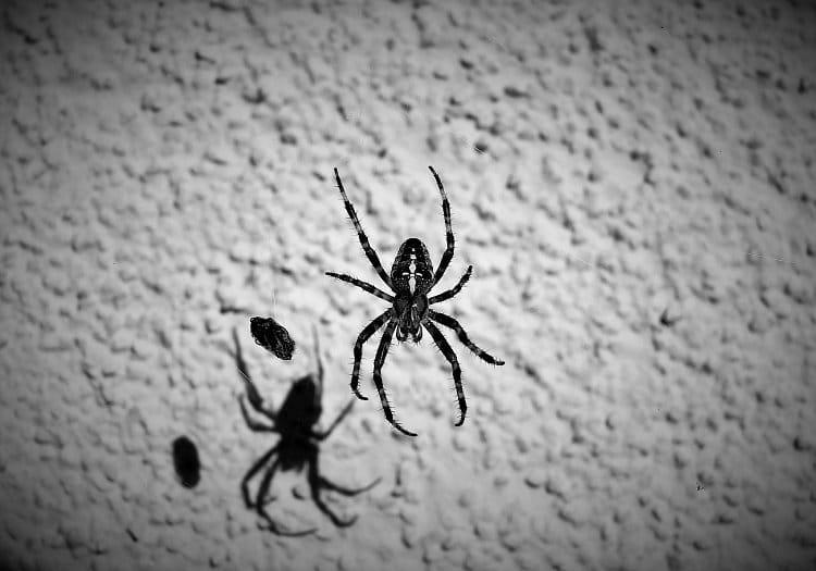 Pavouk a jeho stín