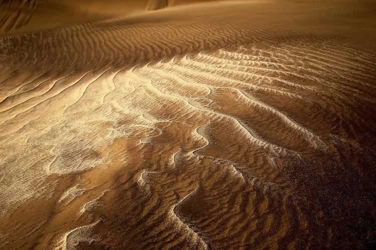 V poušti Namib (4)