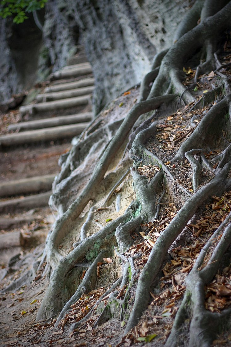 Naše kořeny