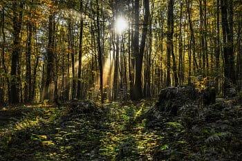 Lesní svítání