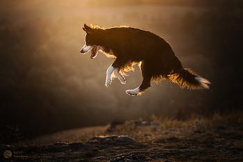 Joy & Jump