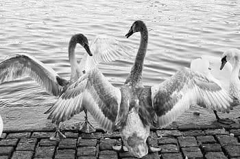 Rozpětí křídel