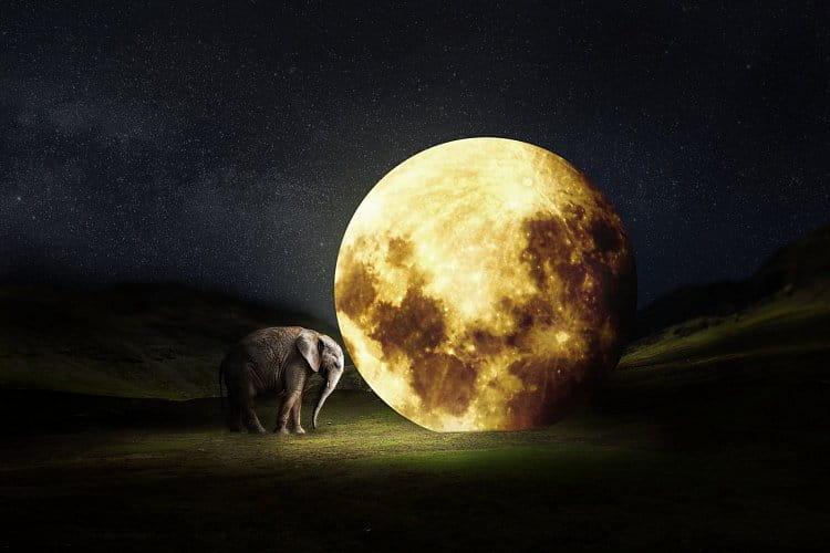 Sloní měsíc