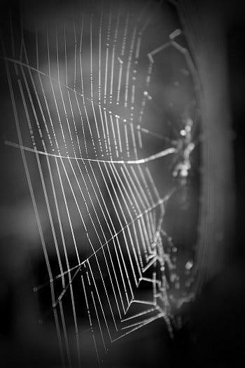 ...a zbyly mi jen střípky snů z pavučiny...