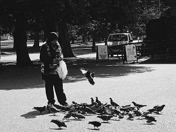 Hladoví holubi