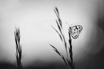 Motýlí podvečer