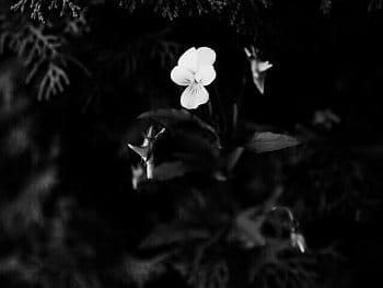Some next flower in my garden