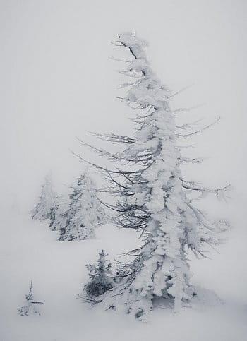 Zasněženou krajinou