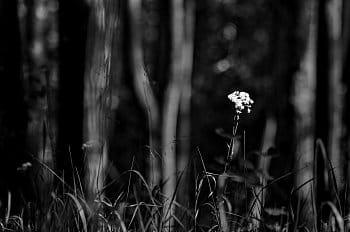 Nevěsta z lesa