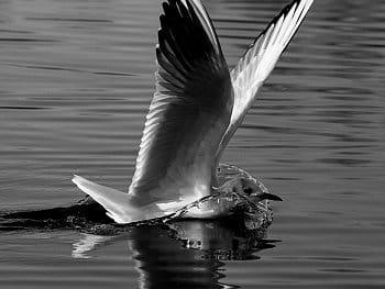 Přistání na vodě