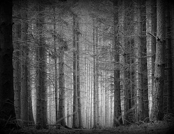 Lesní poezie.