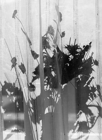 Kytice za oknem