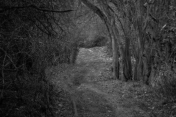 Spící les
