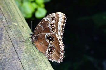 motýl1