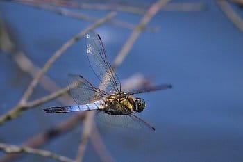 Letí vážka, letí letí....
