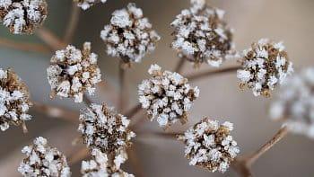 Zimní šperky