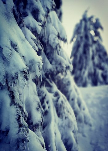 Omrzlý strom