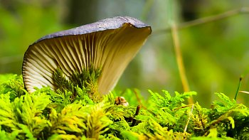 houba v mechu