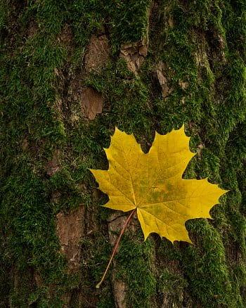 Hvězda podzimu