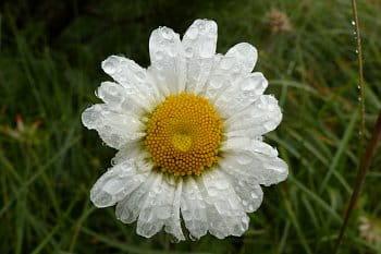 Je po dešti 4