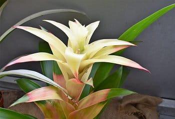 květ2