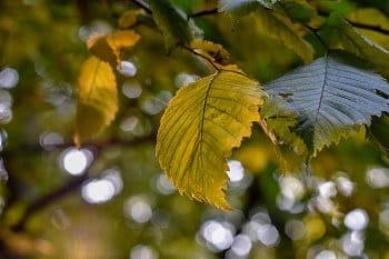 Západ v listí