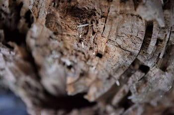 Dřevina