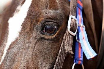 Zaostřeno na oko (koně)