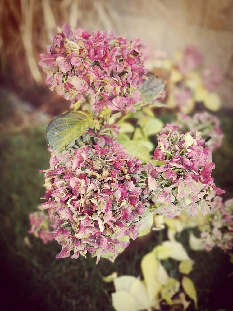 Podzimní kvety