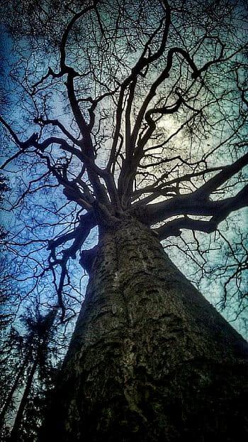 v koruně stromu