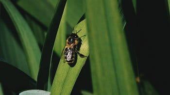 včelí život