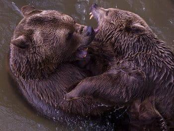 Medvědi 3