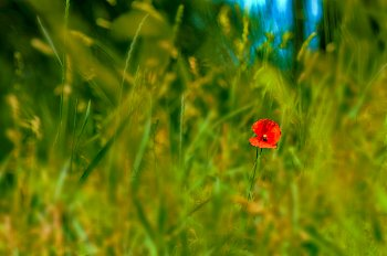 Léto v trávě