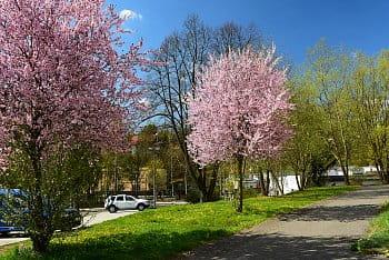 Jarní krása