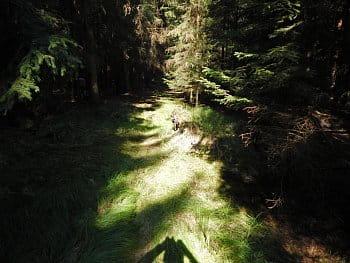 lesní samota
