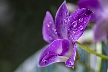 Květinové kapky