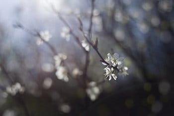 Jarní kouzlení