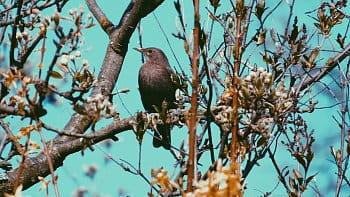 I ptáci chtějí klid