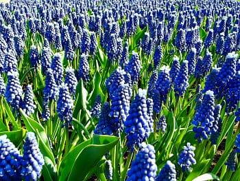 Modrý ráj